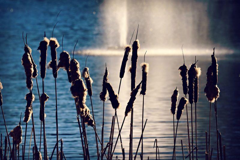 Contoh tumbuhan habitat air