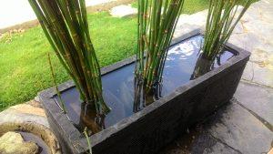 Contoh tumbuhan hidrofit