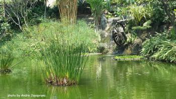 Jenis tumbuhan air