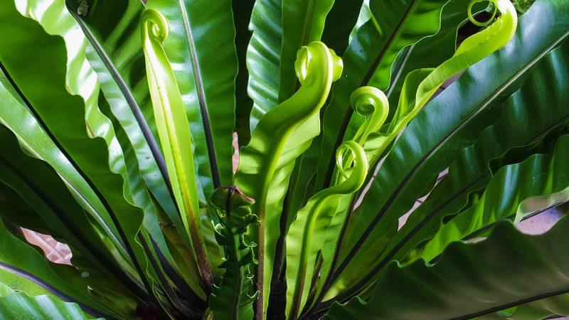 Struktur tumbuhan paku
