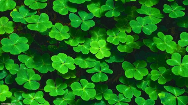 Manfaat tumbuhan paku bagi medis