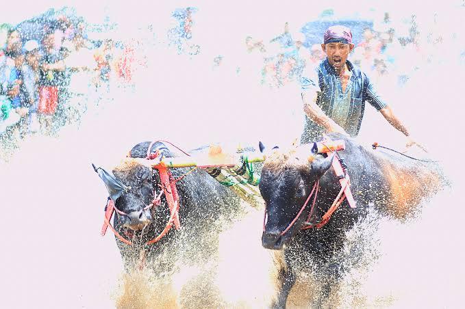 Sejarah kerapan sapi